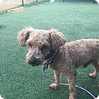 Adopt A Pet :: Cosmo - Dallas, TX