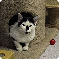 Adopt A Pet :: Paraffin - Chicago, IL