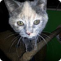 Adopt A Pet :: Ariel - Clearfield, UT