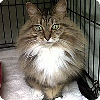 Adopt A Pet :: Channel - Mission, BC
