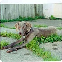 Adopt A Pet :: Berlyn - Attica, NY