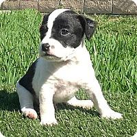 Adopt A Pet :: Bandit - La Habra Heights, CA