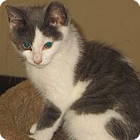 Adopt A Pet :: Spitfire - Catasauqua, PA