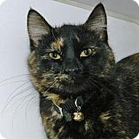 Adopt A Pet :: Monroe - Cheyenne, WY