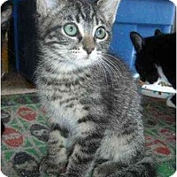 Adopt A Pet :: Quincy - Irvine, CA