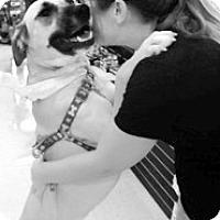 Adopt A Pet :: Emily - Scottsdale, AZ