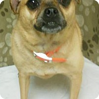 Adopt A Pet :: Pudgy - Gary, IN