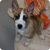 Adopt A Pet :: Kay - Mechanicsburg, PA
