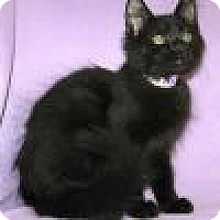 Adopt A Pet :: Nanna - Powell, OH