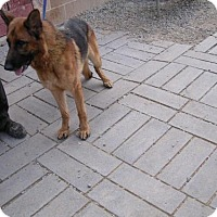 Adopt A Pet :: BIENEVOMZISAWINKEL. - Yucaipa, CA