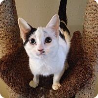 Adopt A Pet :: Vega - St. Louis, MO