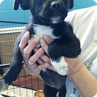Adopt A Pet :: Eggnog - Burlington, NJ