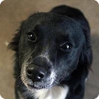 Adopt A Pet :: Joni - Waco, TX