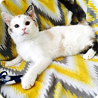 Adopt A Pet :: Pretty - Addison, IL