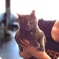 Adopt A Pet :: Natasha - Venice, FL