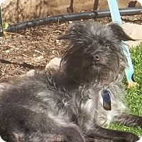 Adopt A Pet :: Gracie - Las Vegas, NV