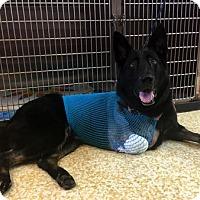 Adopt A Pet :: Sparky - Mira Loma, CA