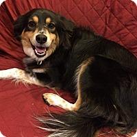 Adopt A Pet :: Gus - Elk River, MN