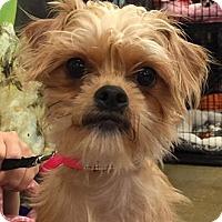 Adopt A Pet :: Gigi - Orlando, FL