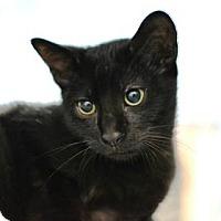 Adopt A Pet :: Sherlock - New Orleans, LA