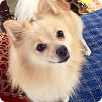 Adopt A Pet :: BEAR - NYC, NY