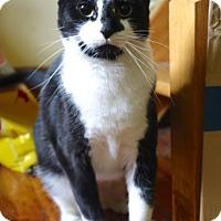 Adopt A Pet :: Leonora - Brooklyn, NY