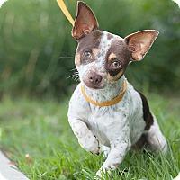 Adopt A Pet :: Josh - Long Beach, CA