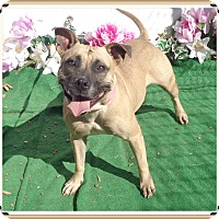 Adopt A Pet :: ROXY SEE ALSO MIN - Marietta, GA
