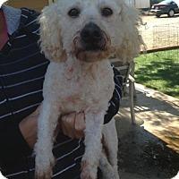 Adopt A Pet :: Jonathan - Temecula, CA