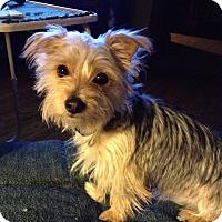 Adopt A Pet :: Dexter - Northumberland, ON