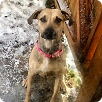 Adopt A Pet :: Brenna - Northeast, OH