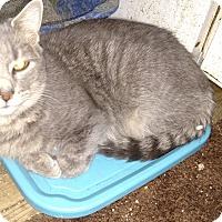 Adopt A Pet :: Chrysta - Benton, PA