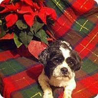 Adopt A Pet :: Charlie - Alden, NY