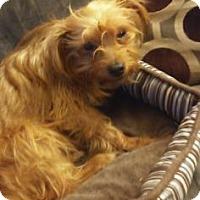 Adopt A Pet :: Kiwi - Newport, KY