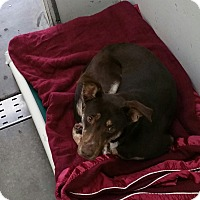 Adopt A Pet :: Zura - Chippewa Falls, WI