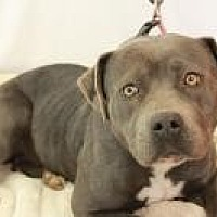 Adopt A Pet :: Athena - Huachuca City, AZ