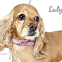 Adopt A Pet :: Lady - Rancho Mirage, CA