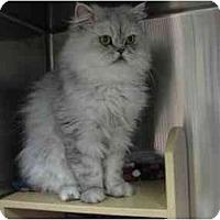 Adopt A Pet :: Misty - Greenville, SC