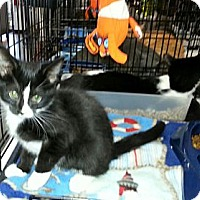 Adopt A Pet :: Little Miracles - Harrisburg, NC