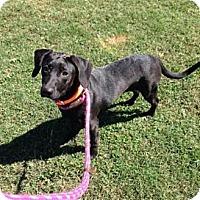 Adopt A Pet :: Bea - Hop Bottom, PA