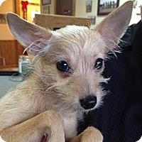 Adopt A Pet :: Ariel - Stilwell, OK
