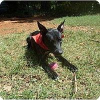 Adopt A Pet :: Curious George - Eden, NC