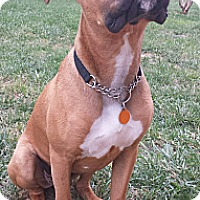 Adopt A Pet :: Boudreaux - Hagerstown, MD