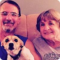 Adopt A Pet :: Daisy - Plain City, OH