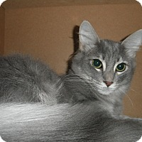 Adopt A Pet :: Aniston - Milwaukee, WI