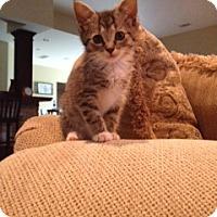 Adopt A Pet :: MONICA aka LANCEY - Hamilton, NJ
