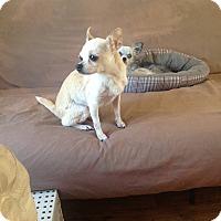 Adopt A Pet :: Cricket - Milton, FL