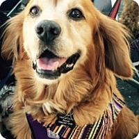 Adopt A Pet :: Teddy - Sacramento, CA