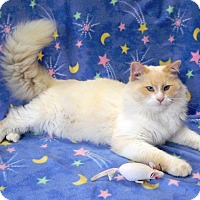 Declawed Cats For Adoption Nc
