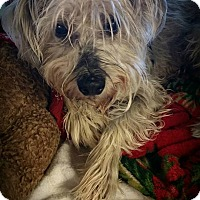 Adopt A Pet :: Baby - Weatherford, TX